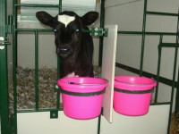 A new, better test for Johnes Disease in Dairy Cows