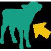 Interactive Calf