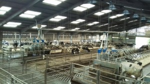 MYERSCOUGH COLLEGE DAIRY INNOVATION A DUTCH TREAT!