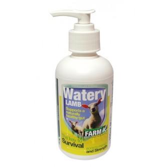 WateryLamb